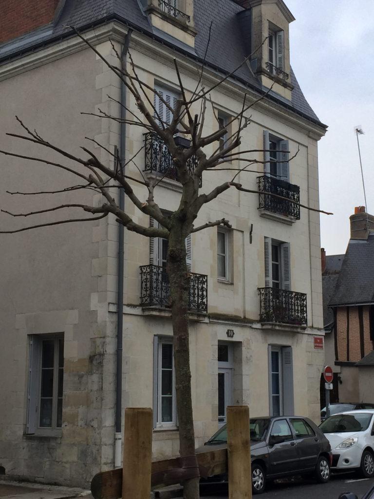 L'arbre de la place